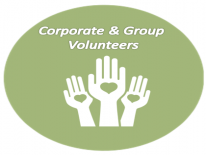 Organizational Volunteers