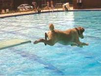 Doggie Day Swim