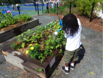 Establish outdoor gardens across the District