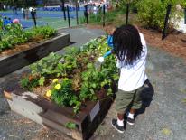 Establish outdoor gardens across the District